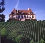 Madiran vineyard