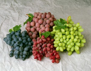 Four Varieties of Table Grapes