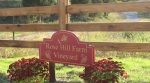 rose-hill-sign