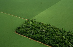 Brazilian soy fields surround tiny remaining patch of rainforest.