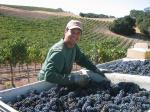 Alex in the vineyard