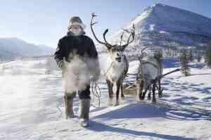 A Leelanau vintner practises pruning on elk antlers.