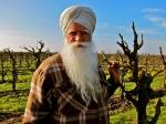 How's the harvest. Abu?