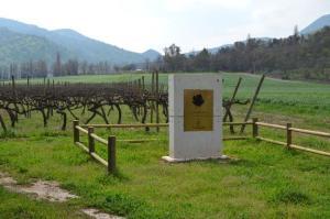 Carmen vineyard