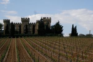 Southern Rhône vineyard