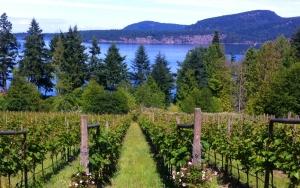 Beachfront vineyard
