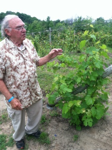 Tony Ciccone with Foch vines.
