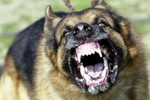 Dangerous-Dog-Breed1