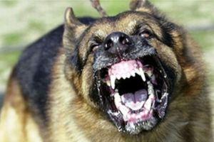 Dangerous-Dog-Breed1