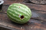 Watermelon-Hole