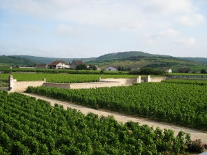 Typical walled clos in Chassagne-Montrachet