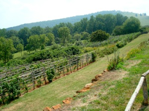 Monticello vineyards