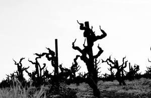 Satan's vineyard