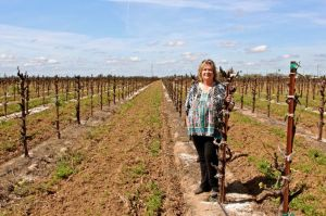Sue Tipton and her vines